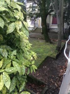 Ce jardin va disparaitre si V.Fristot réalise l'opération