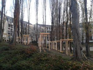 arbres-hoche-3