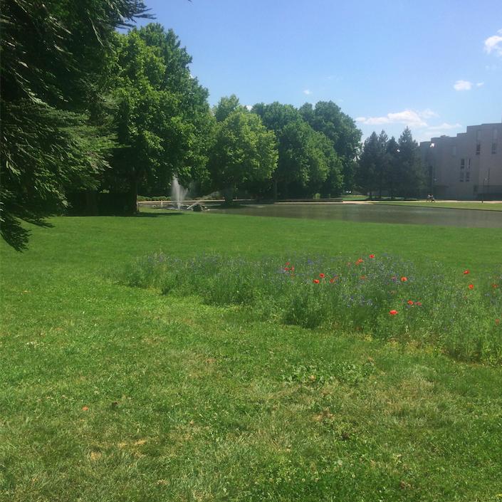 Rien à voir avec l'urbanisme de la municipalité Carignon avec Reyniès-Bayard : un vrai parc de 5,5 hectares pour 3 fois moins d'habitants