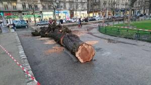 E.Piolle regarde tomber les arbres: il n'y est pour rien mais ça lui permet de fermer la place Victor Hugo. Il ne pouvait pas engager des travaux qui auraient menacé les marronniers