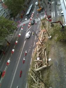 Sur les boulevards l'hécatombe a été terrifiante sous la municipalité Destot/Safar (PS) . ici cours Jean Jaurés