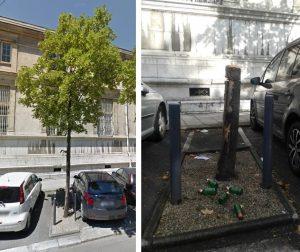 arbres-rue-hebert-6